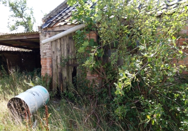 This outbuilding now has a fig tree growing through it!