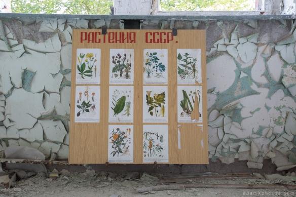 Adam X Urbex Beelitz Heilstatten Germany Urban Exploration Lung clinic Sanatorium Hospital Decay Lost Abandoned Hidden peeling paint soviet russian plants