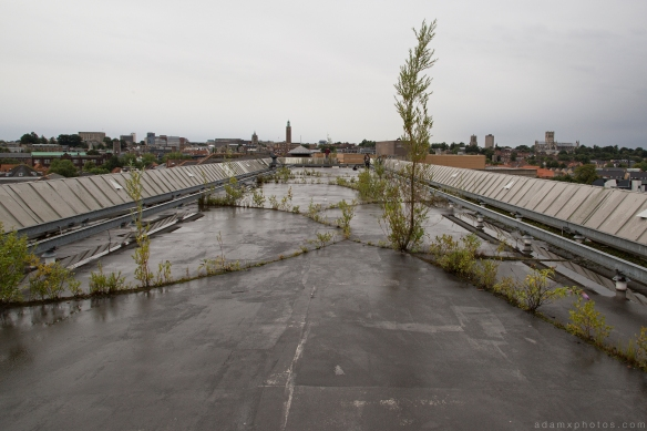 Tree roof Sovereign House HMSO Norwich Urbex Adam X Urban Exploration 2015 Abandoned decay lost forgotten derelict